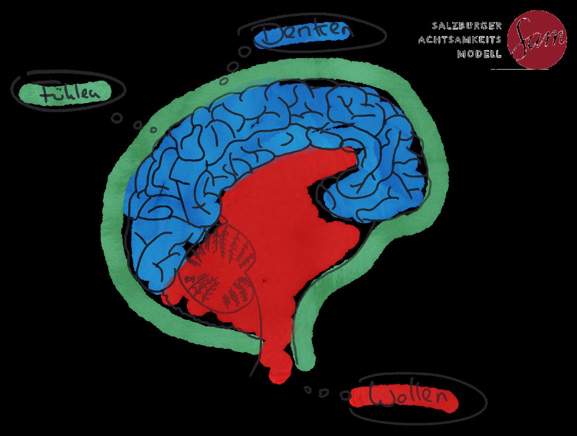 MFN MC Brain SAM V2